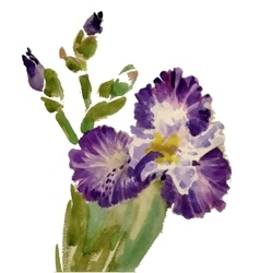 Watercolor blooming iris flowers vector