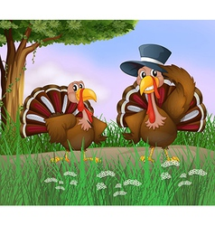Cartoon turkeys vector