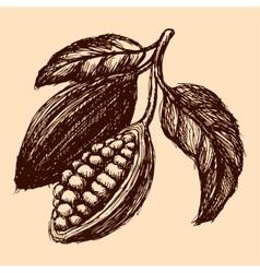 cocoa hand drawn sketch vector image
