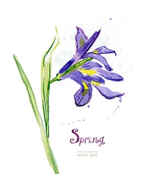 Invitation card with watercolor spring flower iris vector