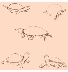 Turtles pencil sketch by hand vintage colors vector