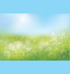 Spring flowers sky vector