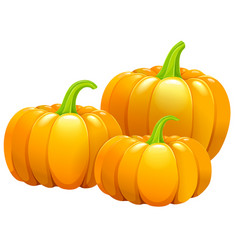 three beautiful pumpkins without leaves vector image vector image