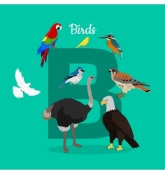 Birds with Letter B Isolated ABC Alphabet vector image