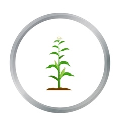 Corn icon cartoon single plant icon from the big vector
