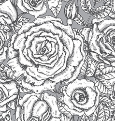 Roses graphic vector image
