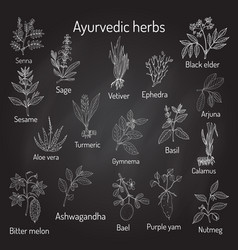 Ayurvedic herbs natural botanical set vector