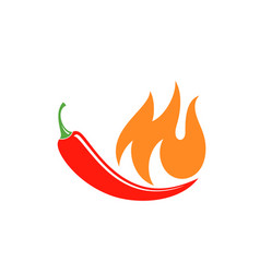 chilli pepper vector image vector image