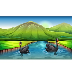 Swans on lake landscape vector