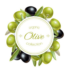Olive round banner vector image vector image