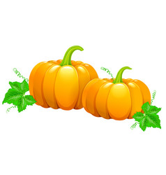 Two beautiful pumpkins vector