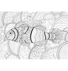 Clownfish with high details vector image