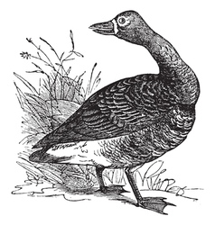 White fronted goose engraving vector