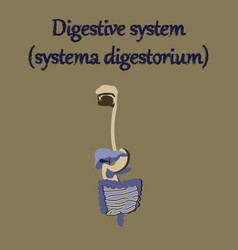 human organ icon in flat style digestive system vector image vector image