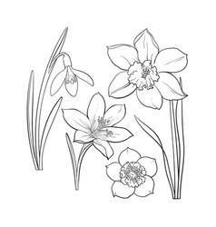set of summer flowers daffodil snowdrop crocus vector image