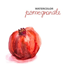Background with watercolor pomegranate vector image