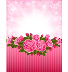 Roses backdrop vector image