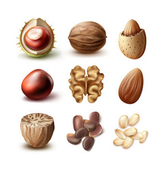 Set of different nuts vector