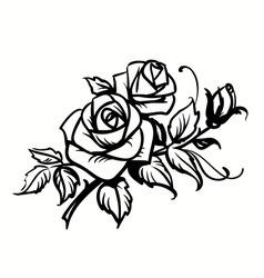 Roses Black outline drawing on white background vector image