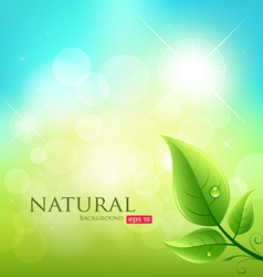 Green leaf natural background vector image vector image