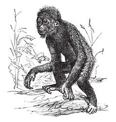 Orangutan vintage engraving vector image