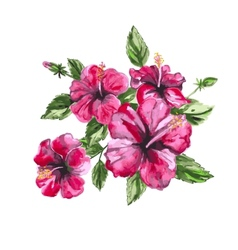 Hibiscus watercolor painting exotic flower vector