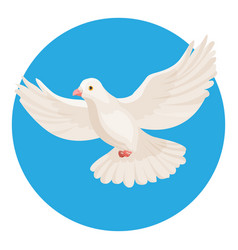 dove of white color symbol of peace isolated in vector image