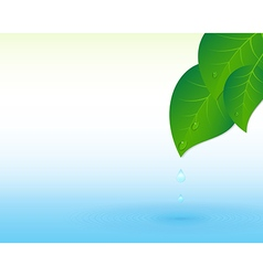 Water splash and leaves vector