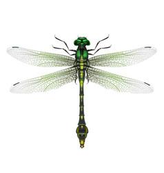 gomphus vulgatissimus dragonfly vector image