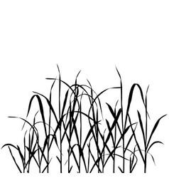 Grass plants vector