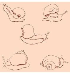 Snails pencil sketch by hand vintage colors vector