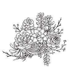 Hand drawn composition of succulent plants vector
