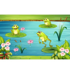 Three frogs living in the pond vector