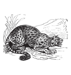 Little spotted cat engraving vector