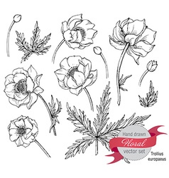 set of graphic spring flowers trollius vector image vector image