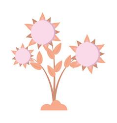 sunflower floral pretty round vector image