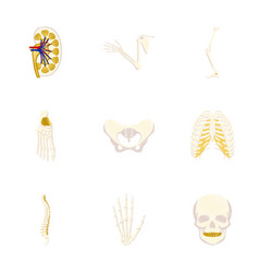 Assembly of flat shading style icon human bones vector