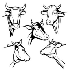 isolated cow head portraits cattle faces vector image