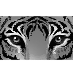 A tiger with sharp eyes vector image vector image