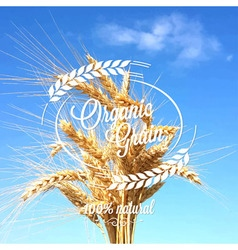 Wheat ears spikes design background vector