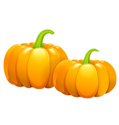 Two beautiful pumpkins without leaves vector