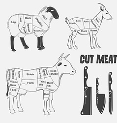British cuts of lamb veal beef goat or animal vector