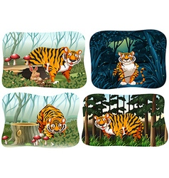 Four scene of tiger living in the forest vector image