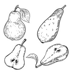 Set of hand drawn pears on white background vector