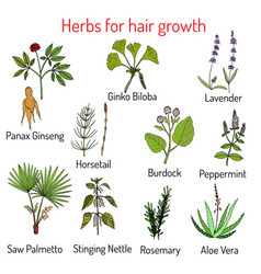 Natural hair care herbs for growth vector