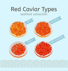 red caviar types vector image vector image