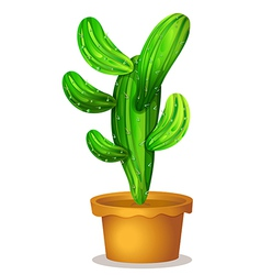A cactus plant vector