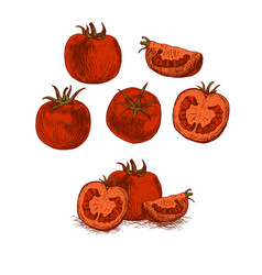 Hand drawn set of red tomato sketch vector