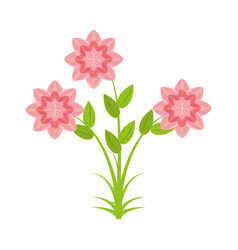 Petunia flower nature spring vector