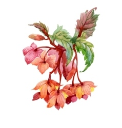 Watercolor blooming flowers vector image